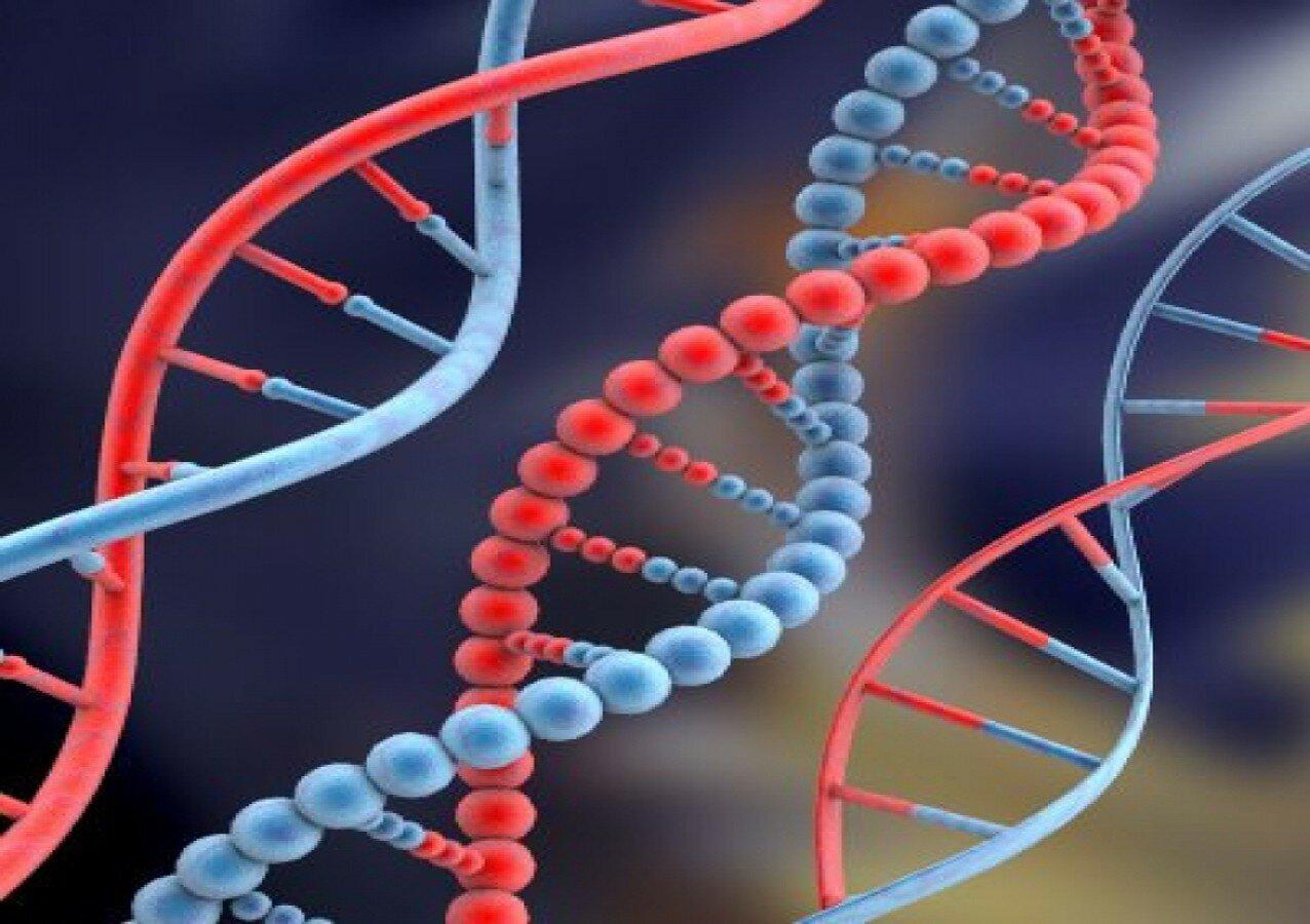 Молекула днк нуклеотиды хромосомы гены геном